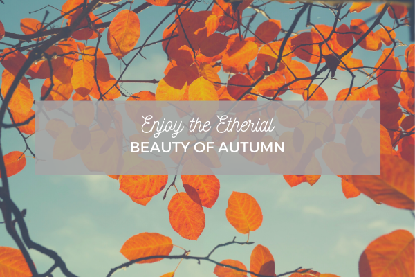 Enjoy the Ethereal Beauty of Autumn